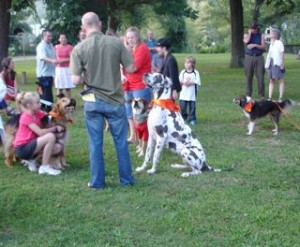 the Great Dane wins the largest dog contest.