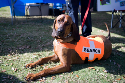 search-dog-011