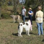 Any And All Dog Show Tryon Nc